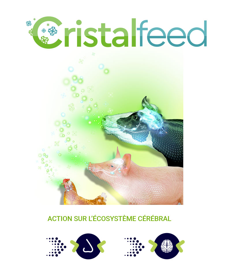 cristalfeed