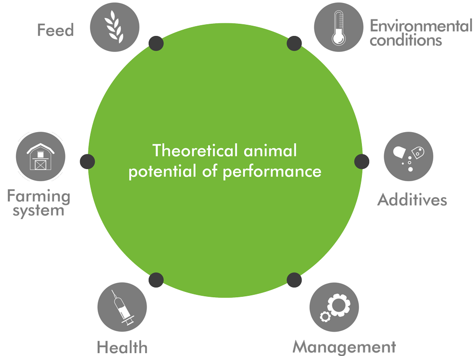 theoretical_performance_animal_care_english