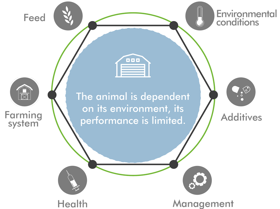 technical_performance_animal_care_english